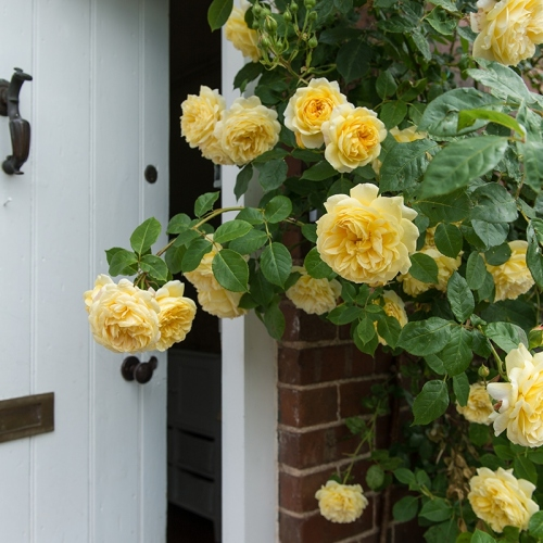 Shropshire Bed and Breakfast Accommodation Flowers UK
